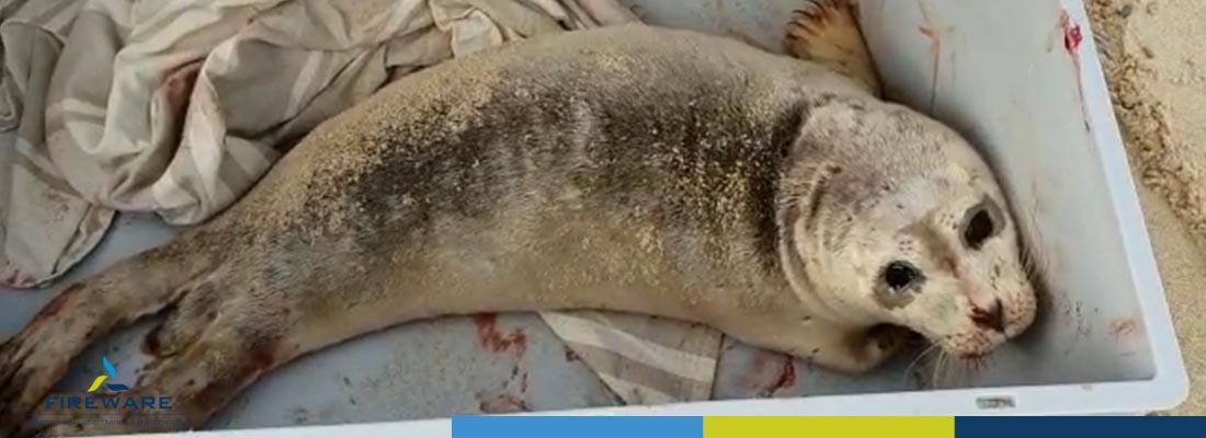 Zielige zeehond